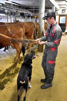 Farm Boys, Country Boys, Mens Rain Boots, Boys Life, Rodeo, Winter Boots, Farm Animals, Cow, Blue