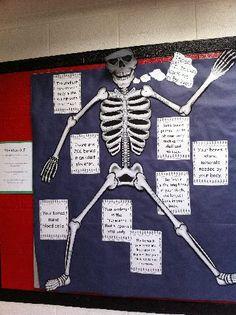 bone bulletin board | Bulletin Board Ideas for Physical Education