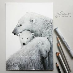 Polar Bear family wet & cold snuggling for warmth ❄ -Started this 2 months ago and I finally had the time to finish it off. I'm putting together a time-lapse video of this drawing tonight which should be ready to share in a few days. -Unfortunately I wasn't able to find the photographers name, if you know who it is please tag them so I can give credit. -I used Faber-Castell polychromos pencils, Copic markers and Posca paint pens on Canson Drawing paper.