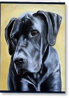 Great Dane - Original Fine Art for Sale - © Elizabeth Barrett Great Dane Funny, Great Dane Dogs, Black Great Danes, Graphite Art, Dog Artwork, Dogs And Kids, Color Pencil Art, Pet Life, Dog Portraits