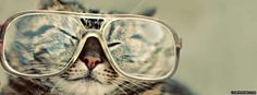 Nearsighted Cat