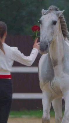 Beautiful Girl Video, Beautiful Nature Scenes, Horse World, Horse Riding, Labrador, Puppies, Horses, Videos, Amazing