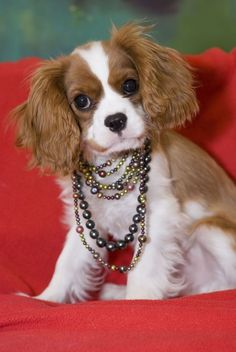 stylin' Cav...with jewels