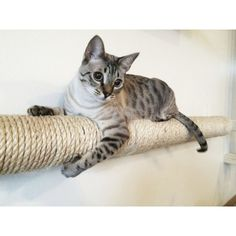 Wall-mounted Sisal Cat Pole - Horizontal Runway