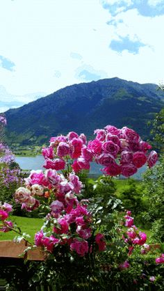 Animated gif about gif in Flowers by Carol Owens Beautiful Scenery Pictures, Beautiful Gif, Beautiful Roses, Beautiful Landscapes, Flowers Gif, All Flowers, Spring Flowers, All Nature, Amazing Nature