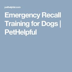 Emergency Recall Training for Dogs | PetHelpful