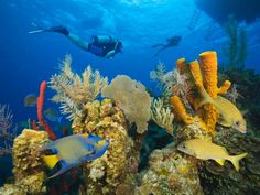 Decades before Belize became an international destination coveted by divers, Charles Darwin studied the evolution of its incredible coral reefs. Take a look at the array of colorful fish, sponges and more than 70 species of coral!
