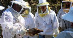 Become a #beekeeping master with the help of #BeeWell Honey Farm! http://beewellhoneyfarm.com/