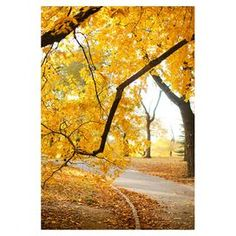 """Giclee canvas print of an autumn road.  Product: Wall artConstruction Material: CanvasDimensions: Small: 24"""" H x 16"""" WMedium: 32"""" H x 22"""" WLarge: 47"""" H x 30"""" W"""