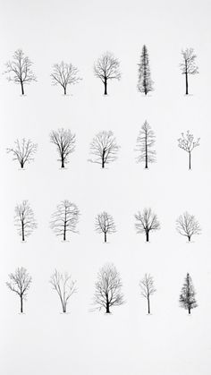 "Katie Holten has made a series of tree drawings. In 2015 she created a ""Tree Alphabet"" and published the book ""About Trees"". A series of tree drawings was commissioned by the Zentrum Paul Klee for the group exhibition ""About Trees"" in Drawn Art, Hand Drawn, Art Plastique, Painting & Drawing, Drawing Trees, Life Drawing, Drawing Drawing, Drawing Sketches, Tatoos"