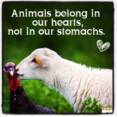 Animals belong in our hearts, not in our stomachs. Go vegan. Be vegan. Reasons To Be Vegan, Vegan Quotes, Why Vegan, Stop Animal Cruelty, Vegan Animals, Farm Animals, Animal Welfare, Vegan Lifestyle, Animal Rights