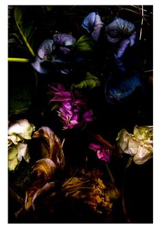 Dead Flowers by Takashi Mori, Photography, Digital Tote Blumen, Fotografie von Takashi Mori Dark Flowers, Colorful Flowers, Beautiful Flowers, Dried Flowers, Wilted Flowers, Bouquet Flowers, Paper Flowers, Wedding Flowers, Mabon
