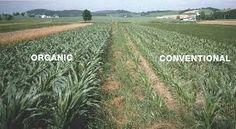 Bildresultat för regenerative agriculture
