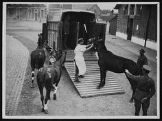 Wounded horses being loaded. France WWI