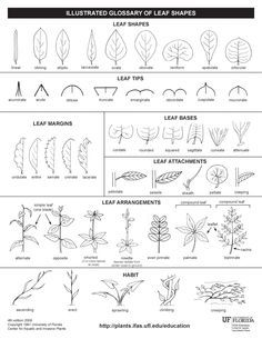 seed dispersal. simple diagram of different types