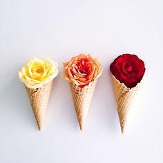 cones by kellysnapshappy - ✿Floralls✿ My Flower, Flower Art, Beautiful Flowers, Simply Beautiful, Spring Flowers, Wild Flowers, Fleur Orange, Pastel Cupcakes, Food Art