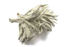 herbs that you can smoke \ herbs you can smoke ; herbs you can smoke plants ; herbs and flowers you can smoke ; what herbs can you smoke ; herbs that you can smoke Aromatic Herbs, Organic Herbs, Medicinal Herbs, Cortisol, Sage Herb, Sage Plant, Sage Smudging, Removing Negative Energy, Therapeutic Essential Oils