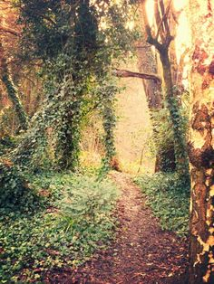 Pathway through the forest