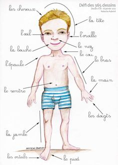 Le corps humain. Planche pour apprendre les partie du corps à un enfant.