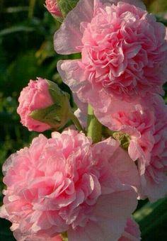 So beautiful flowers.