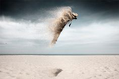 Sand Creatures: Photos by Claire Droppert | Inspiration Grid | Design Inspiration