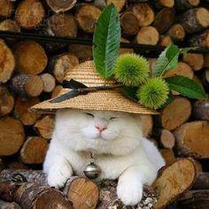 *** แมวเอยแมวเหมียว *** - Pantip
