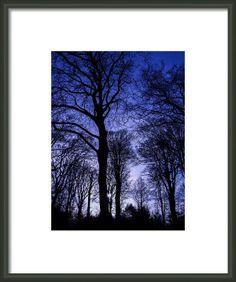 Forest In Moonlight Framed Print By Gary Walker