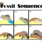 A six step sequence board displays the fossil formation of a dinosaur with picture representations. Another sequence board displays the same stages...
