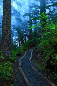 Trilha do Lago Foggy, Floresta Nacional Monte Baker-Snoqualmie, Washington, USA. Fotografia: http://www.duskyswondersite.com