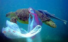 5 Heartbreaking Photos That Remind Us Why We Need to Recycle