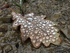 Herbstspaziergang, Regentropfen
