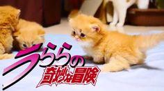 【替え歌】ジョジョのSTAND PROUD歌ってみた【マンチカンズ】~JOJO with cats 4~