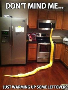 Holy cow! Is that a real snake! I would have a heart attack if I saw that thing in my kitchen!