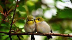 ĆWIR ĆWIR ĆWIR ĆWIR (。◕‿‿◕。) ale pięknie ptaszki... - mam_w_domu_chrupki - Wykop.pl