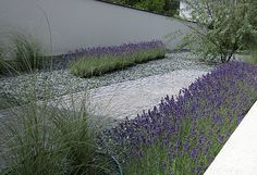 Contemporary use of an old fashioned plant.  Lavender, concrete and white stone.  In love with this!