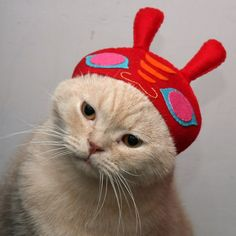 Pretty CATS (ᵔᴥᵔ) cat hat