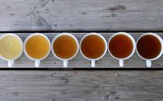 Diferentes tipos de tés y sus propiedades.
