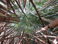 and more bamboo