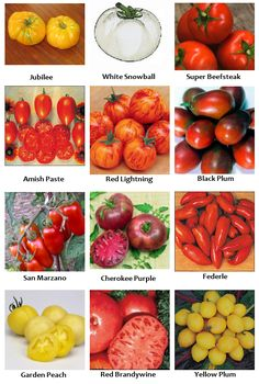 Tomato RAY seeds yellow orange tomatoes Ukraine 20 seeds D Farmer/'s dream