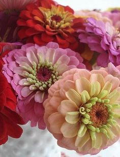 Great photo of beautiful zinnias, and a very cool vintage hobnail vase! Types Of Flowers, My Flower, Fresh Flowers, Flower Power, Beautiful Flowers, Pink Flowers, Ranunculus Flowers, Flower Vases, Flower Arrangements
