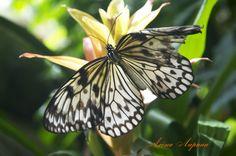 Алена Ларина: фотоальбом Insects, Animals, Animales, Animaux, Animais, Animal