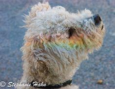 Einreisebestimmungen für Hunde in Spanien