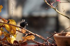 This image is included in my entry on Facebook @https://www.facebook.com/TheLastLeafGardener/posts/1242008769181827 #Dark-eyed juncoes #Urban Gardens #NYC