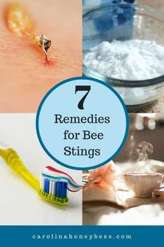 Seek bee sting relief using home remedies. Pain, itch and swelling are reactions to the venom. Try these common bee sting treatments. Honey Bee Bite, Honey Bee Sting, Honey Bees, Wasp Sting Swelling, Wasp Stings, Bee Sting Reaction, Health Remedies, Home Remedies, Natural Remedies