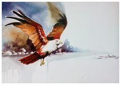 Kite bird watercolor