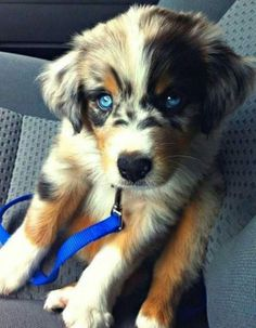 Funny pictures about If You Cross A Husky And A Golden Retriever. Oh, and cool pics about If You Cross A Husky And A Golden Retriever. Also, If You Cross A Husky And A Golden Retriever photos. Baby Animals, Funny Animals, Cute Animals, Funny Dogs, Baby Cats, Wild Animals, Cute Puppies, Dogs And Puppies, Doggies