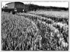Old Land Rover in the Cornfield