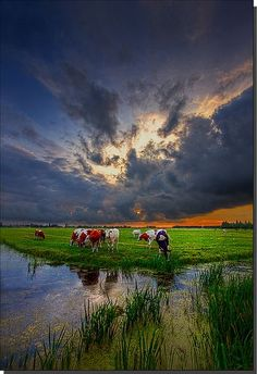 Still Out There (by Dollia Sheombar)- The Netherlands #weather #countryside #clouds