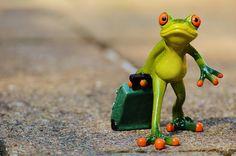カエル, 別れ, 旅行, 荷物, ごちゃ混ぜ, 立ち去る, 休日, 移動中に, 動物, 楽しい, 図