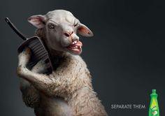 Sunlight - Separate them - #Advert & #Animals